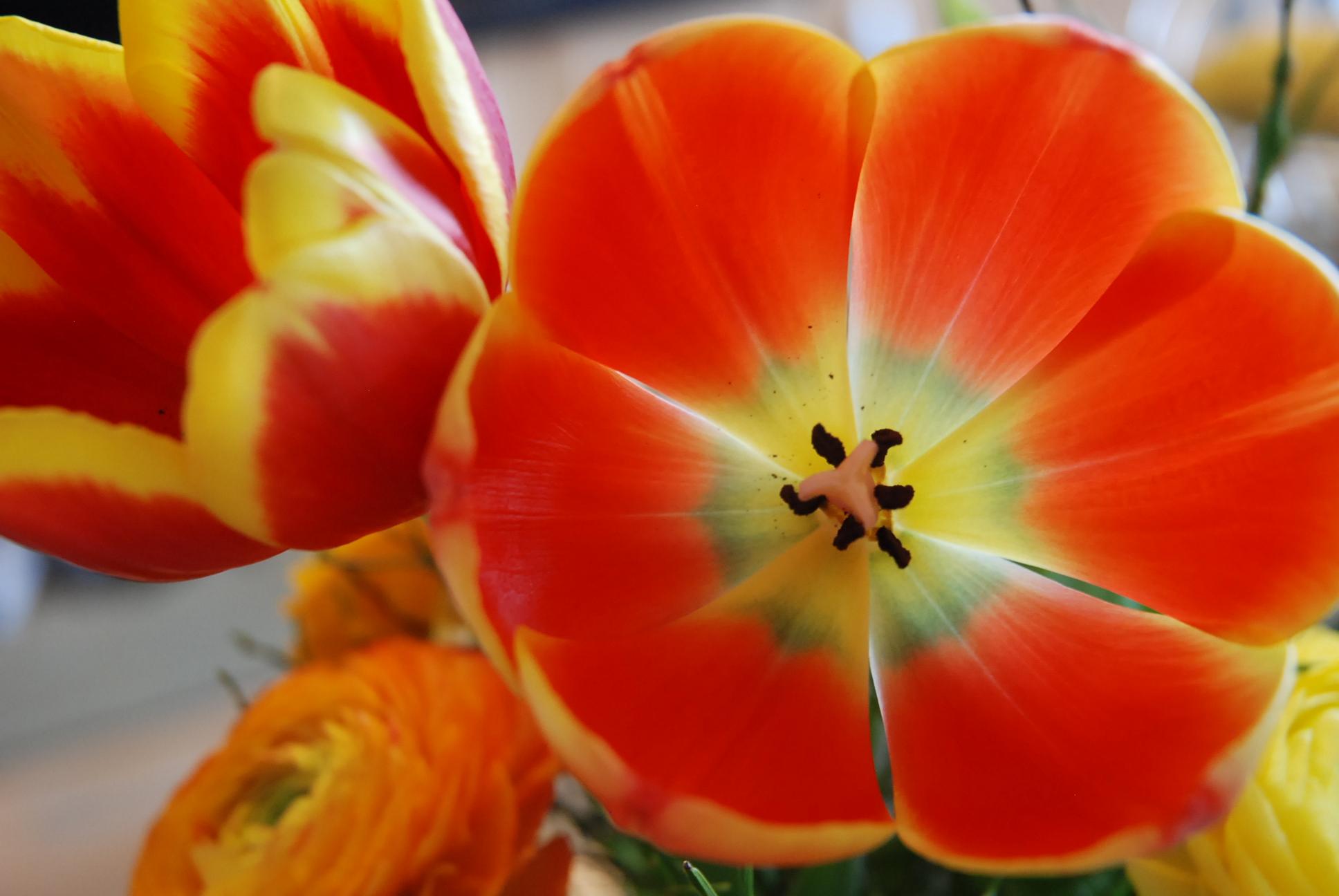 Blumen für dagmar