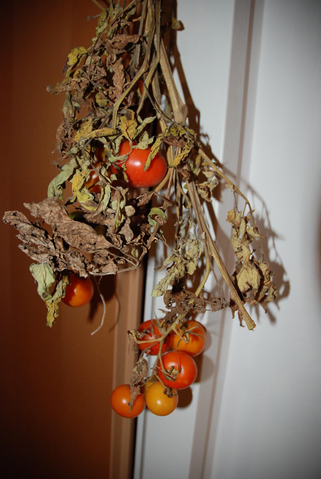 gartentipp 1 tomaten paradeiser nachreifen lassen fit happy. Black Bedroom Furniture Sets. Home Design Ideas