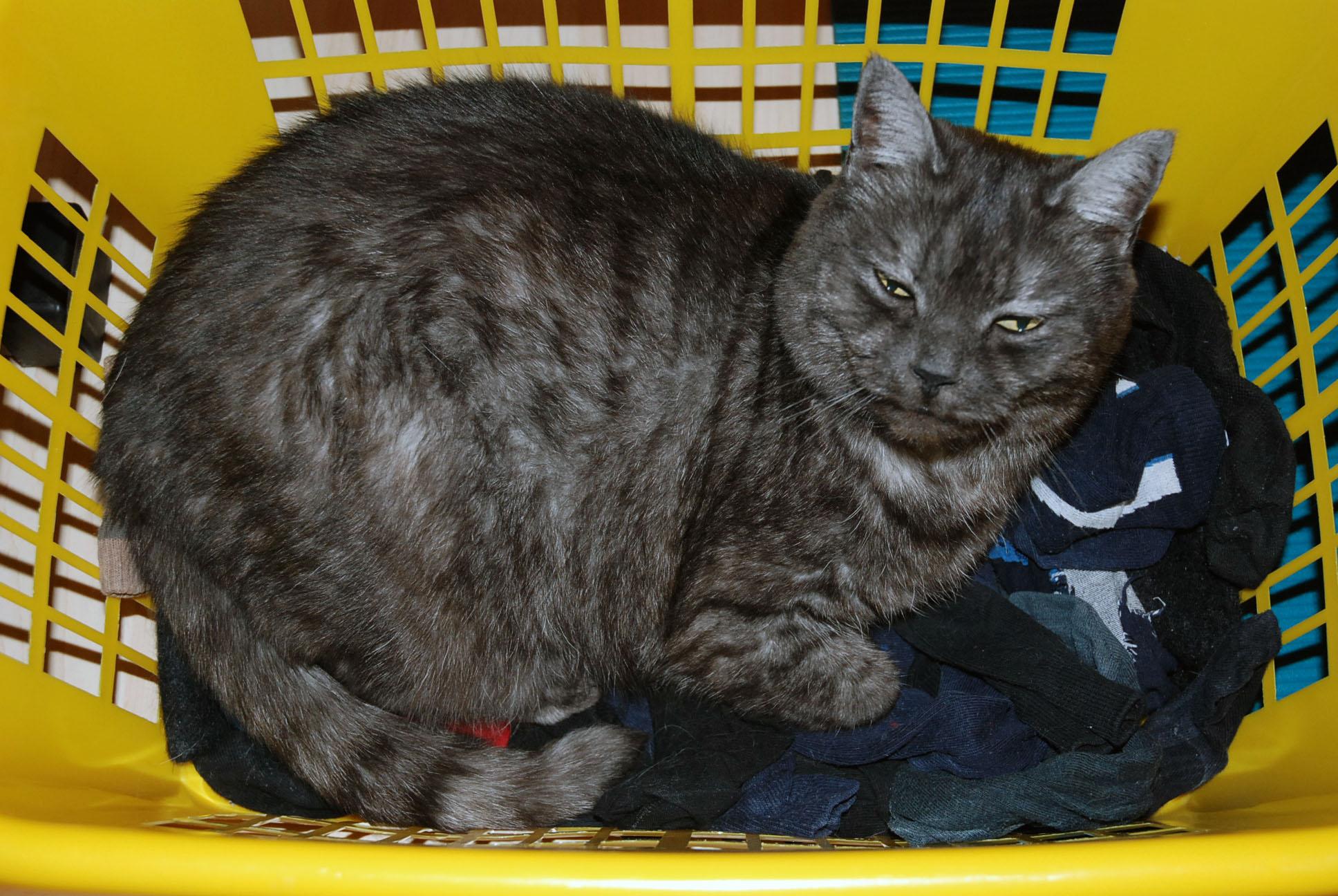 Wer macht jetzt die Wäsche?