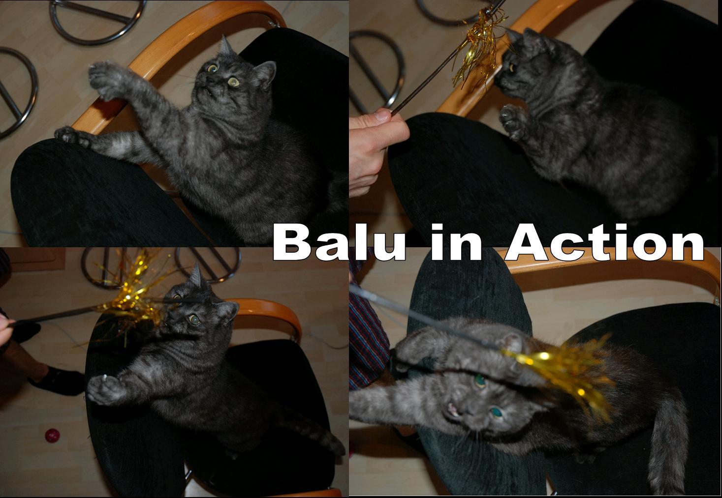 Ein Balu für zwischendurch