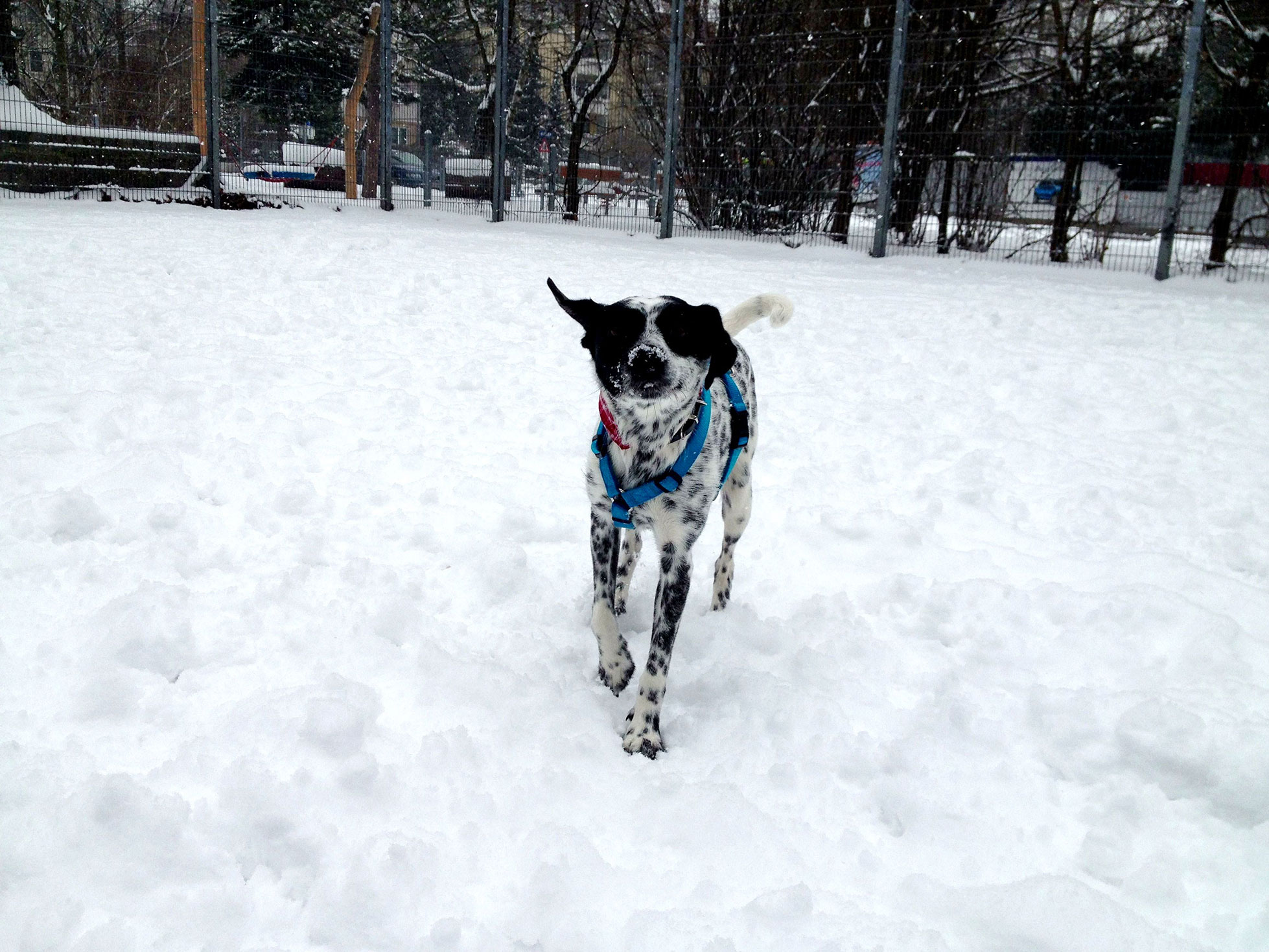 Mini-im-Schnee